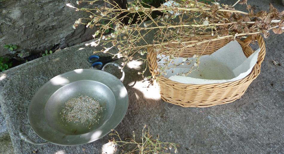 06.12.2019 Symposium Saatgut- und Nutzpflanzenvielfalt