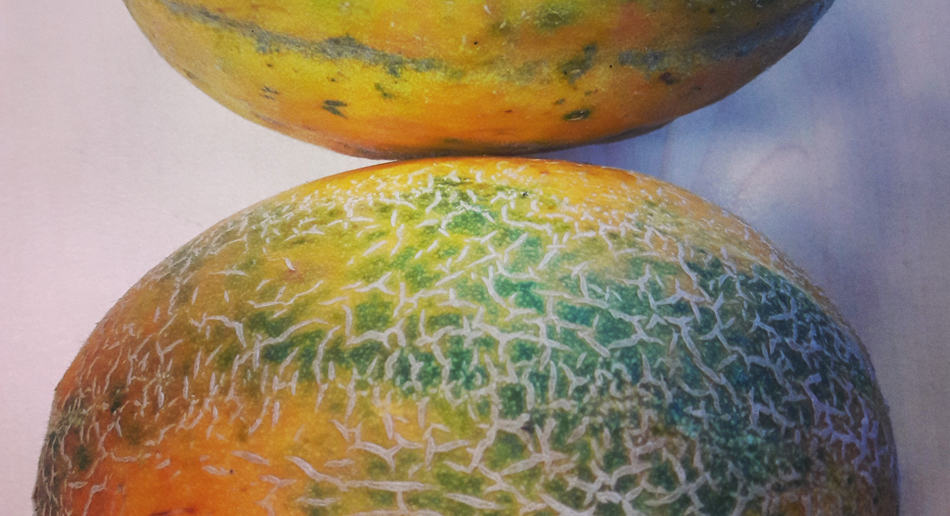 Melone Blenheim Orange