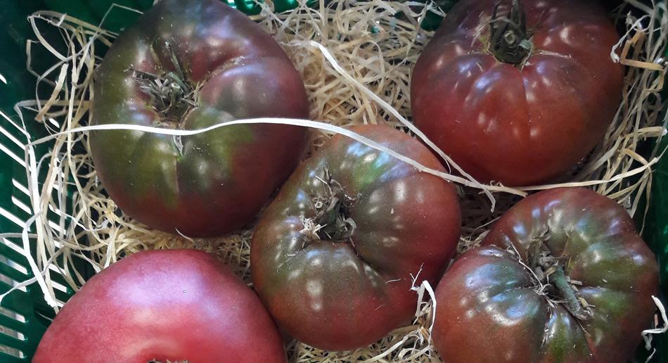 Tomate 'Tschernij Prinz'